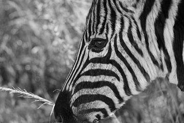 Zebra (schwarz-weiß) von Eline en Siebe Weersma