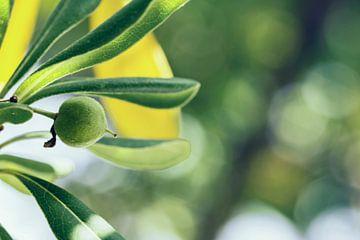 Detail van een olijfboom von Nannie van der Wal