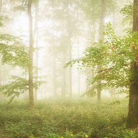 Des hêtres dans le brouillard sur Tobias Luxberg
