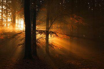 Lichtstralen op de Veluwe van Rick Kloekke