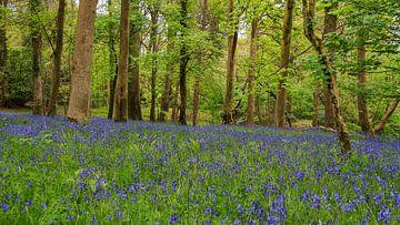 Zee van Blue Bells in het bos . van Licht! Fotografie