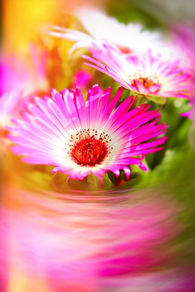 Sonnenanbeter pinkdream van Dagmar Marina