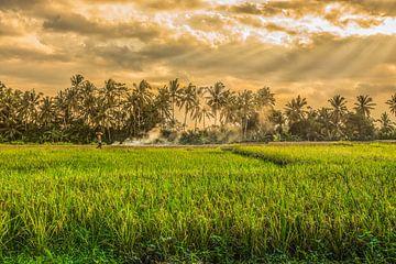 Reisfeld Ubud in Bali von Oscar Limahelu