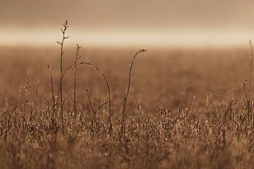 Morgengras von YvePhotography