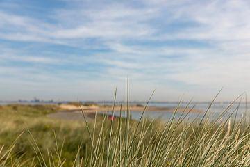 L'herbe de marrache près de Breskens sur Percy's fotografie