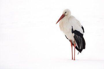 Ooievaar rustend in de sneeuw. van Marcel Pietersen