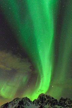 Noorderlicht in de nacht boven de Lofoten in Noord-Noorwegen van