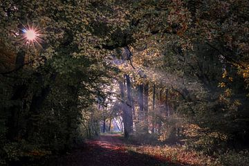 herfst pad van Peter Heins