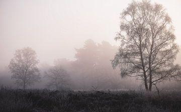sfeerbomen van Tania Perneel