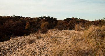 Meijendel | die Landschaft von Sylvana Portier