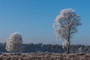 Winterlandschap op de Veluwe von Cilia Brandts