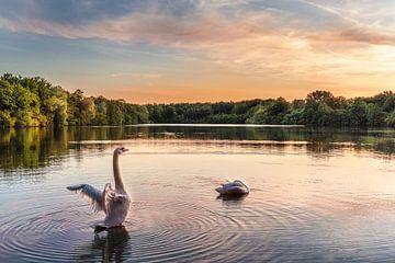 Der Schwan auf dem See von Marc-Sven Kirsch
