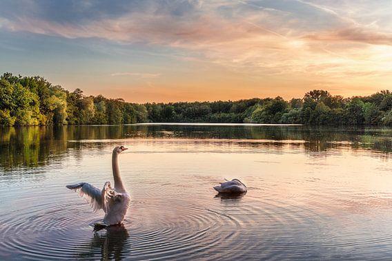De zwaan op het meer