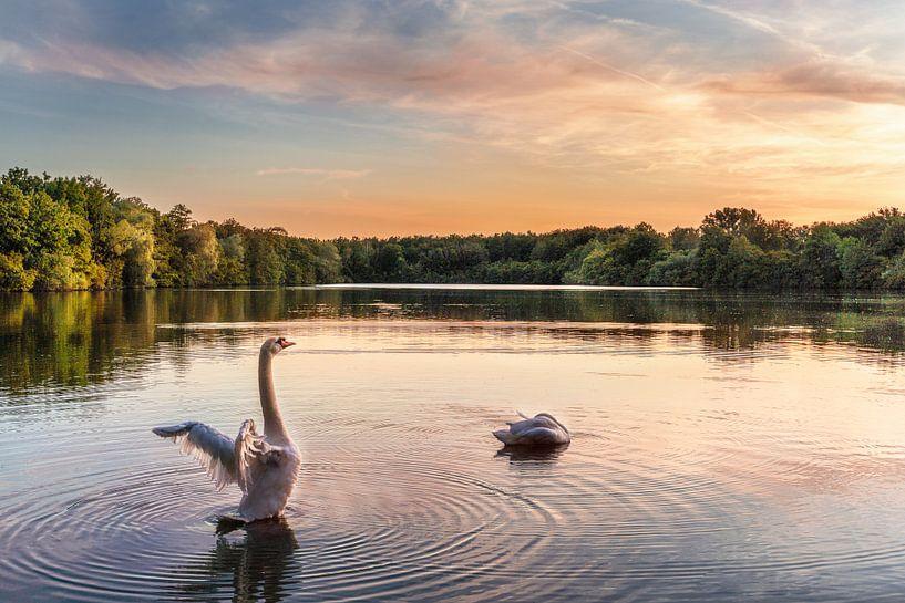 De zwaan op het meer van Marc-Sven Kirsch