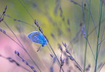 Vlinder in het gras van René van Leeuwen
