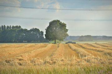 """""""eenzame boom in een lijnenspel"""" von Pascal Engelbarts"""