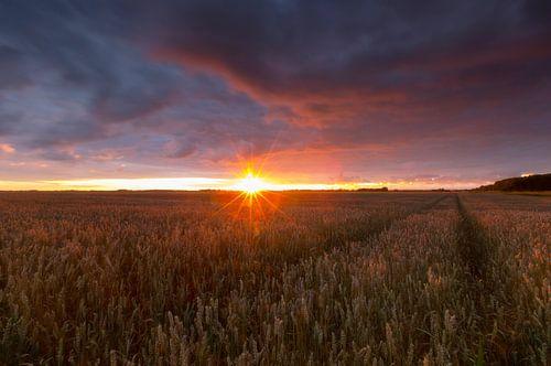 Landschap, korenveld bij zonsondergang tijdens zomerse dag  van