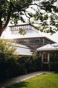 Sonnenstrahlen auf einem Pflanzengewächshaus in den botanischen Gärten von Leiden | Fine Art Urbanju von Evelien Lodewijks