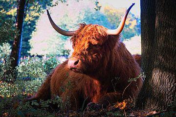 Schottische Highlander-Kuh, die sich an einem Baum ausruht