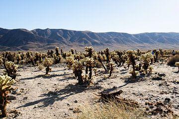 Joshua treepark Verenigde Staten Cactussen van Ingeborg van Bruggen