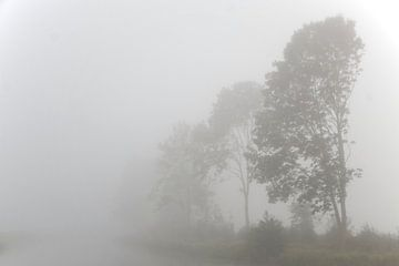 Bomen in de mist  van Ronald Jansen
