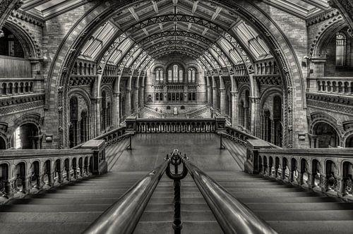 Darwins Temple van Bert Beckers