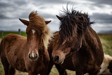 Ijsland Pony van Micha Tuschy