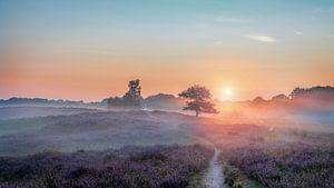 Gasterse Duinen met Flare paarse heide en mist