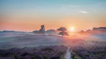 Gasterse Duinen Drenthe Niederlande met Flare, lila Heidekraut und Nebel von R Smallenbroek