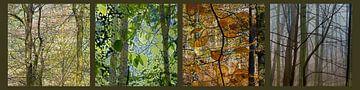 bomen in lente, zomer, herfst en winter