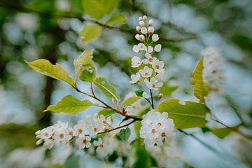 Seidenblüten von Hiske Boon