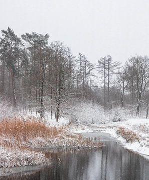 Prachtige winterse vijver met onbevroren riet. van Enrique De Corral