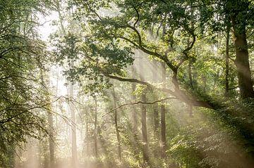Zonneharp von Nancy van Verseveld