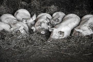 Biggen familie sur Roland de Zeeuw fotografie