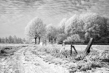 Zaun im Schnee estate Nienoord Leek Niederlande von R Smallenbroek