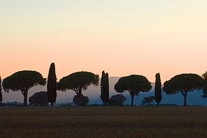 100% Toscane van