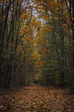 Herbst-Farben von Oguzhan Beyaztas