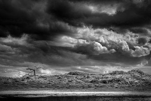 Schoorlse Duinen national park van