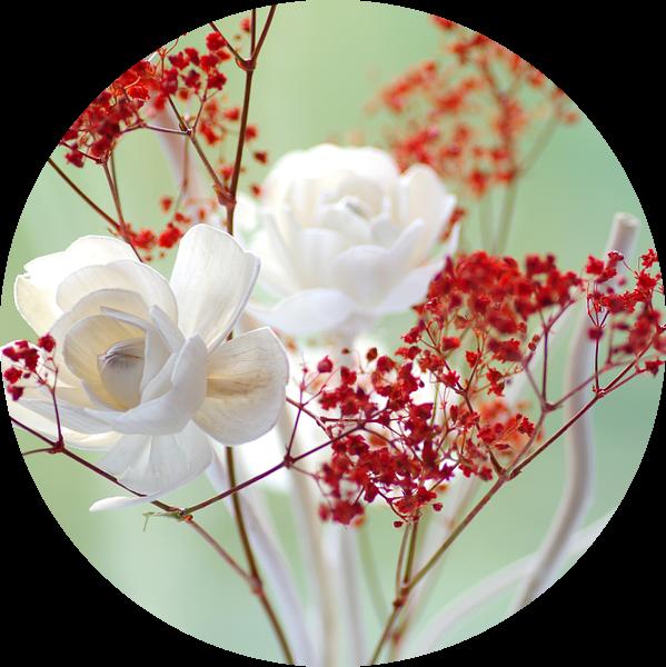 Verse rozenblaadjes stilleven van Tanja Riedel