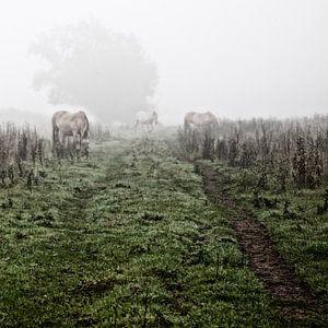 Paarden in de mist: Mystic horses (nr. 3 van 8)