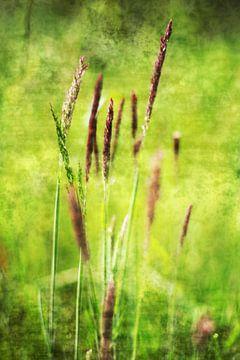 Summer   van Sandra Akkerman