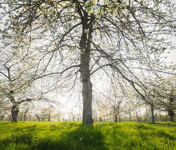 Fruitvallei van Joris Pannemans - Loris Photography