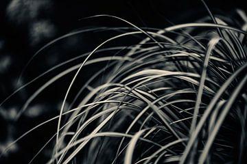 Palmengarten III von Insolitus Fotografie
