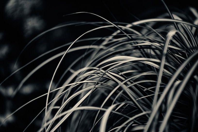 Palmengarten III van Insolitus Fotografie