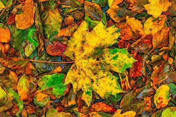 Herbstblätter 2020 von Alround fotograaf Minou Spits