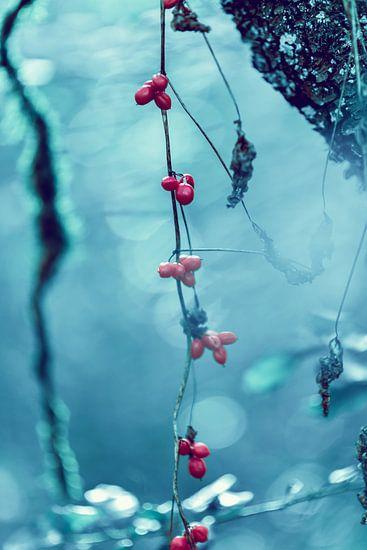 Abstraction van Arnaud Bertrande