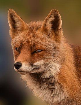 Portrait d'un renard sur Marjolein van Middelkoop
