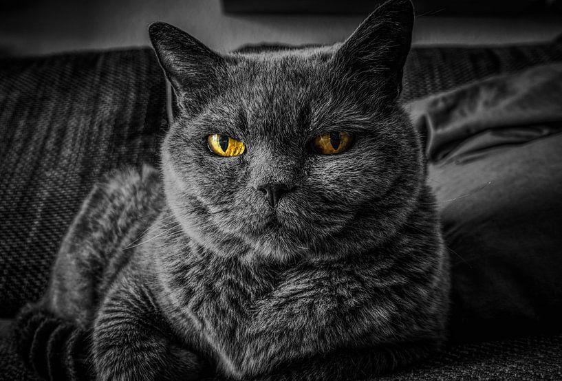 Grijze kat met gele ogen van Atelier Liesjes