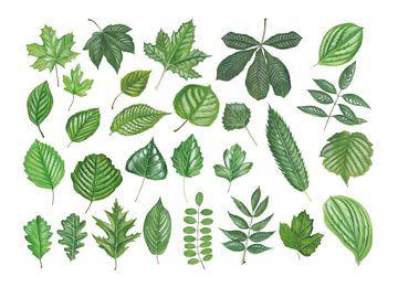 Blätter laubabwerfende Bäume von Jasper de Ruiter