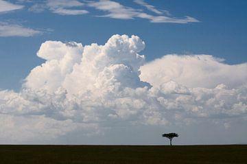 Eenzame boom van Ger van Beek